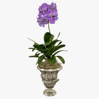 orchid vanda flowers model