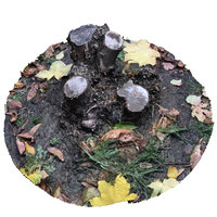 Autumn stump