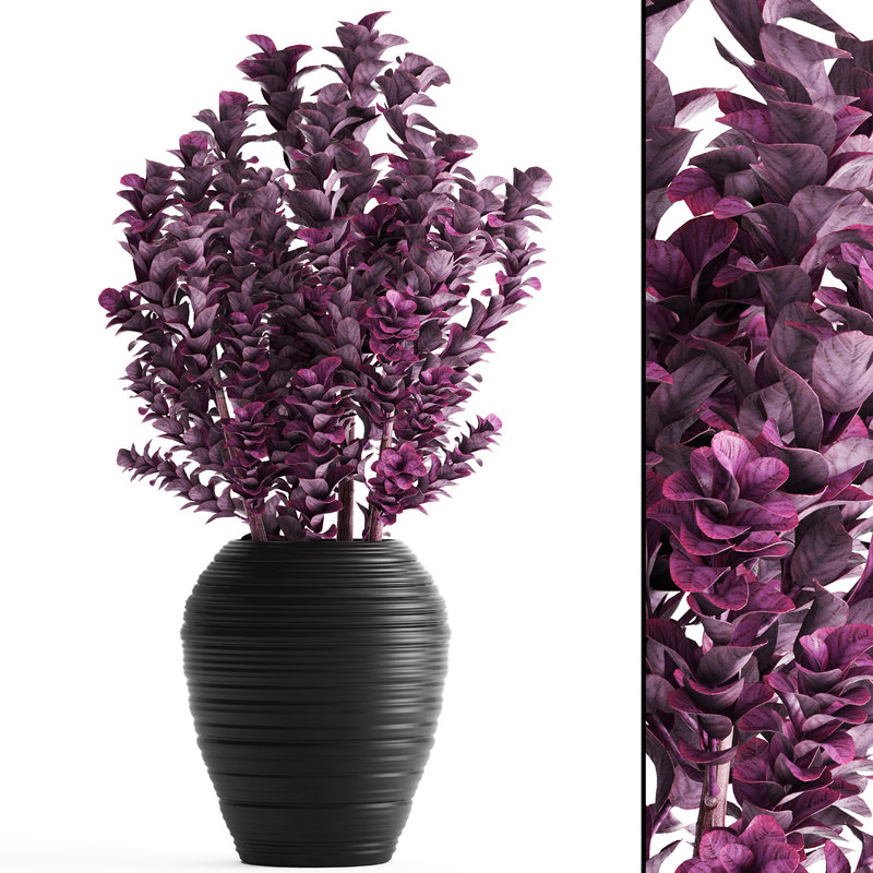 plant pot berberis 3D model