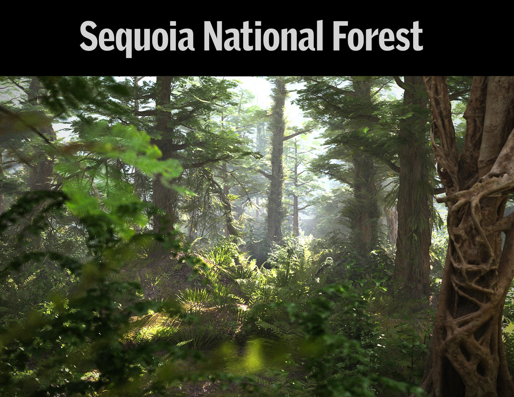sequoia national forest 3D model