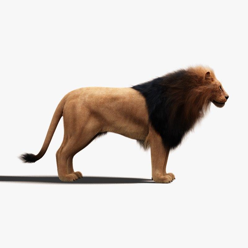 3D model lion fur