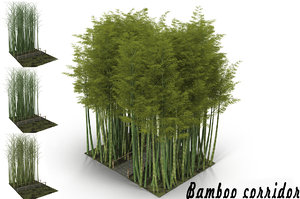 3D model bamboo corridor