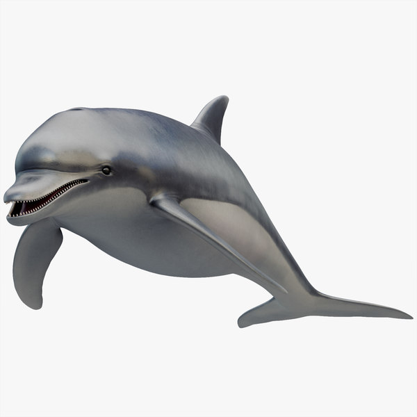 rigged dolphin 3D