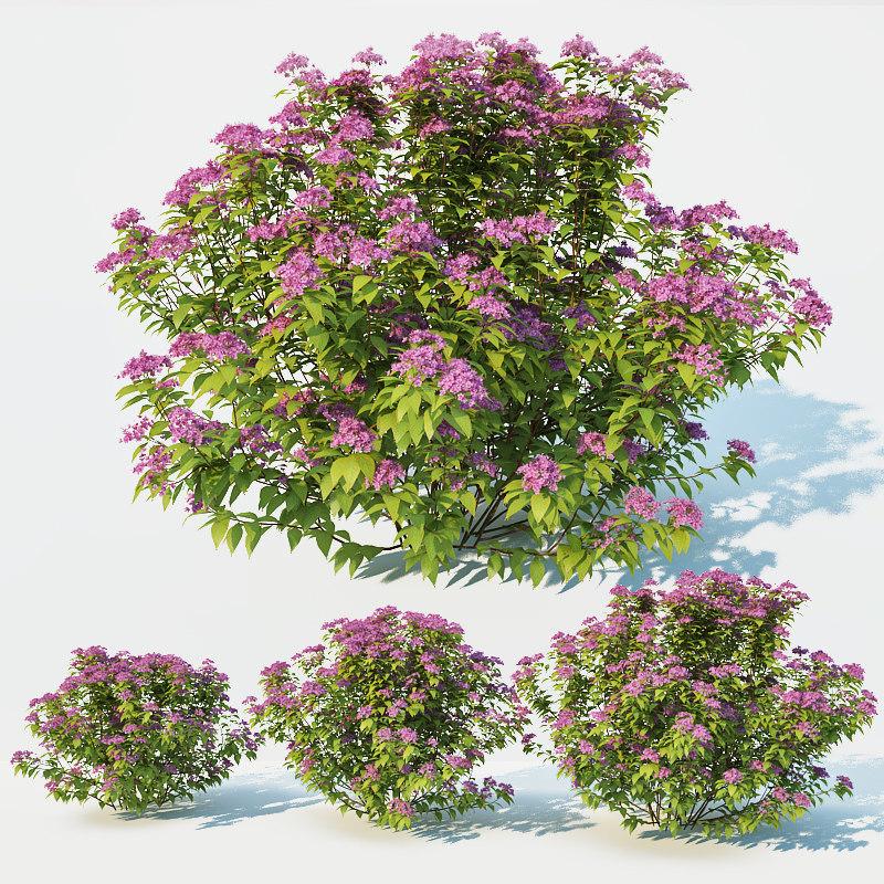3D spirea model