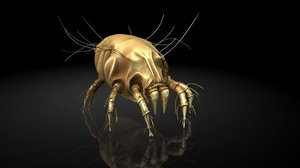 3D insect