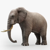 Rigged  Elephant