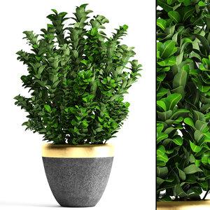 plant pot buxus sempervirens model