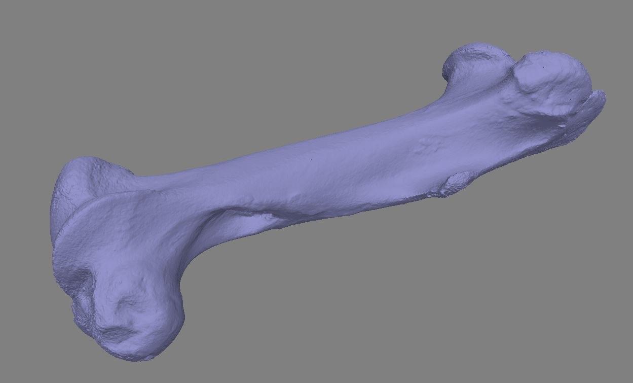 3D cow bone scan raw