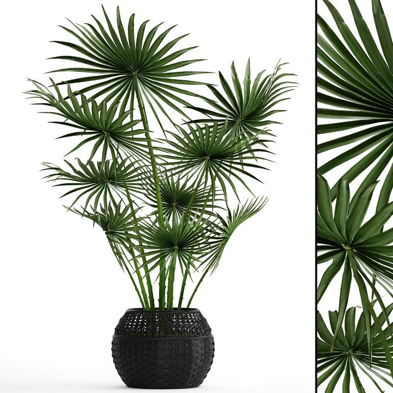 palm tree model