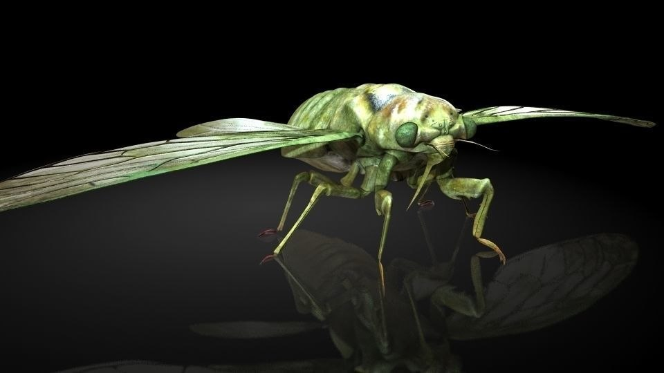 3D model insect
