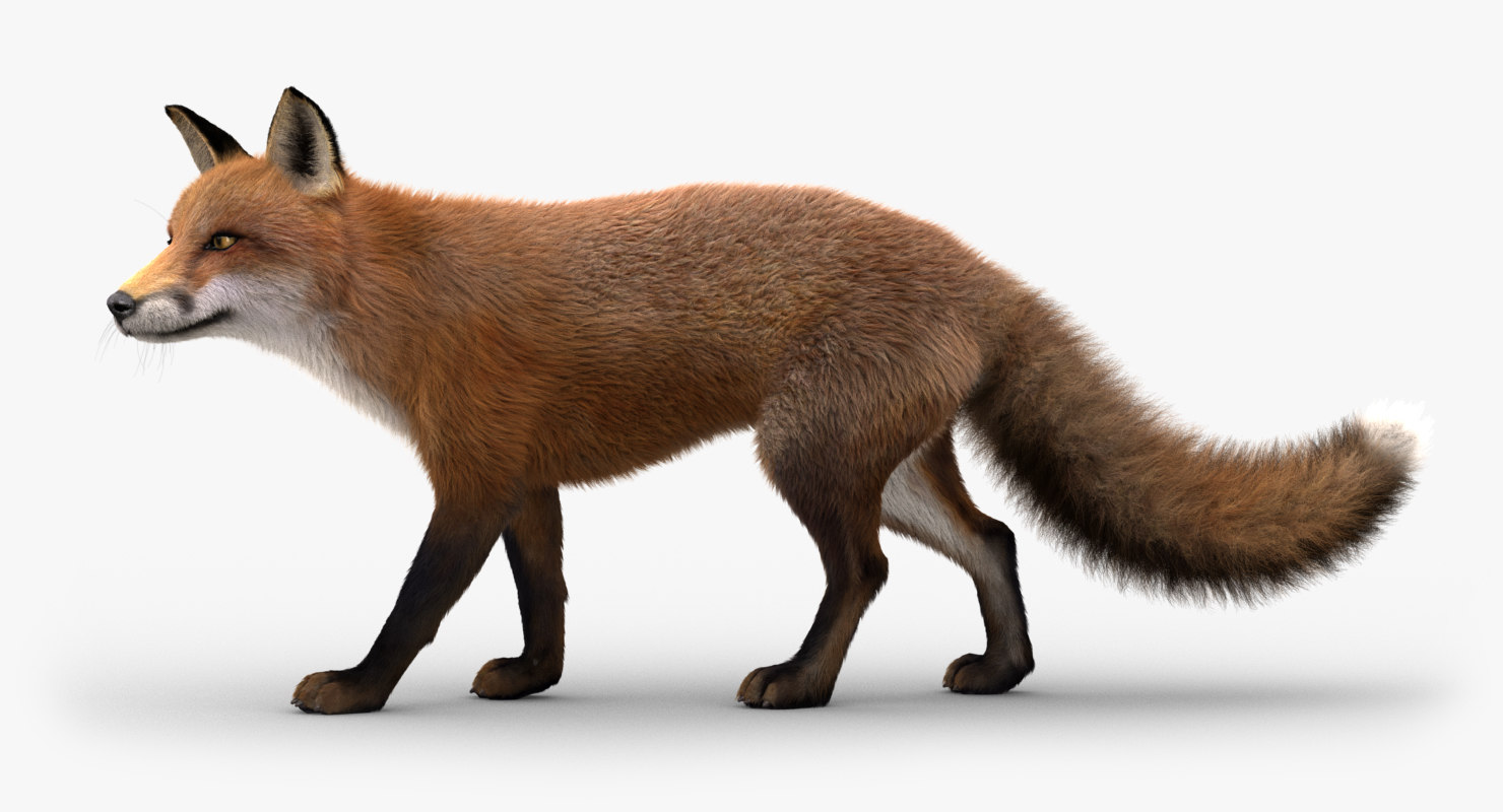 fox fur animation 3D model