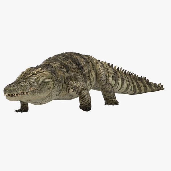 3D realistic crocodile rigging animation model