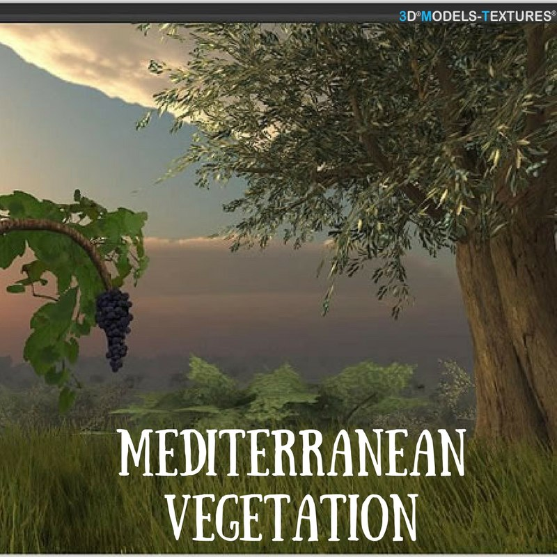 mediterranean vegetation 3D model