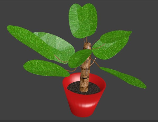3D potted house plant model