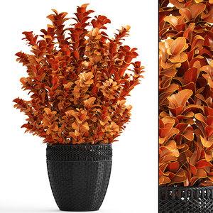 plant pot berberis model