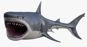 3D realistic great white shark model