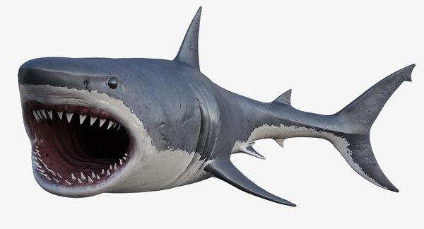 3D realistic great white shark model