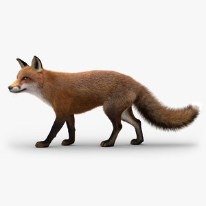 3D model fox rigged fur