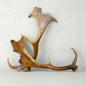 3D naturally shed fallow deer model
