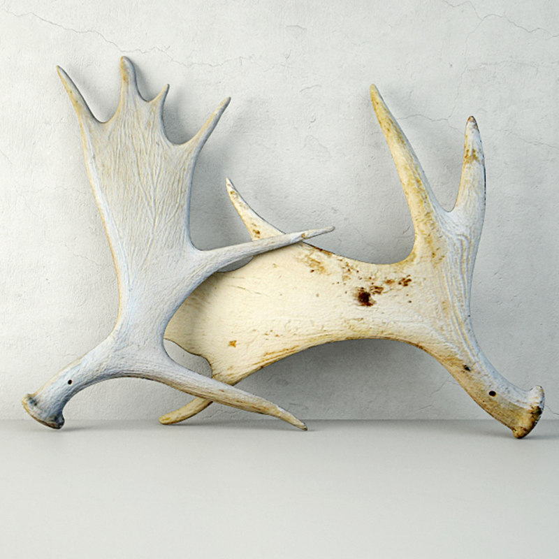 naturally-shed moose antlers 3D