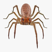 Camel Spider Rigged with Fur 3D Model