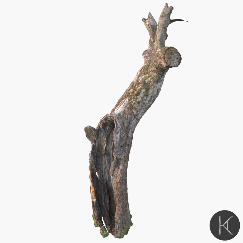 dead tree 3D