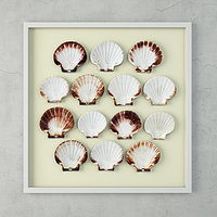 scallop shells 3D model