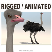 3D animation african ostrich model