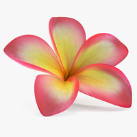 3D plumeria exotic flower model
