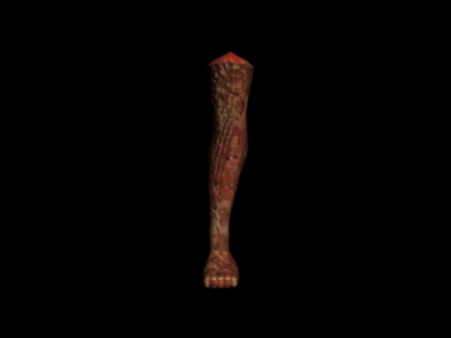 leg 3D model