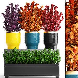 3D plant pot berberis model