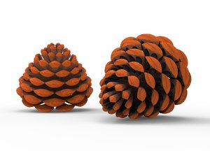 pine cones 3D model