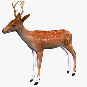 3D deer model