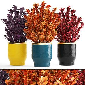 3D plant pot berberis