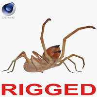 camel spider rigged 3D model