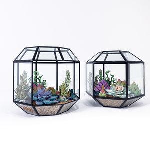 succulents terrariums model