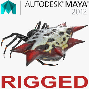 spiny orb weaver spider model