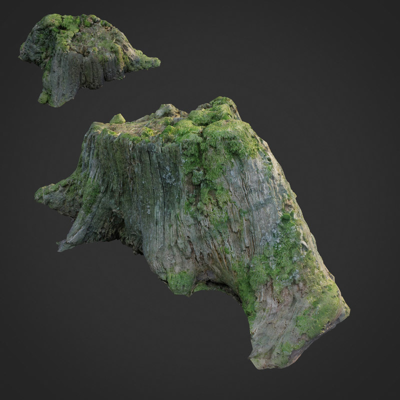 scanned nature tree stump model