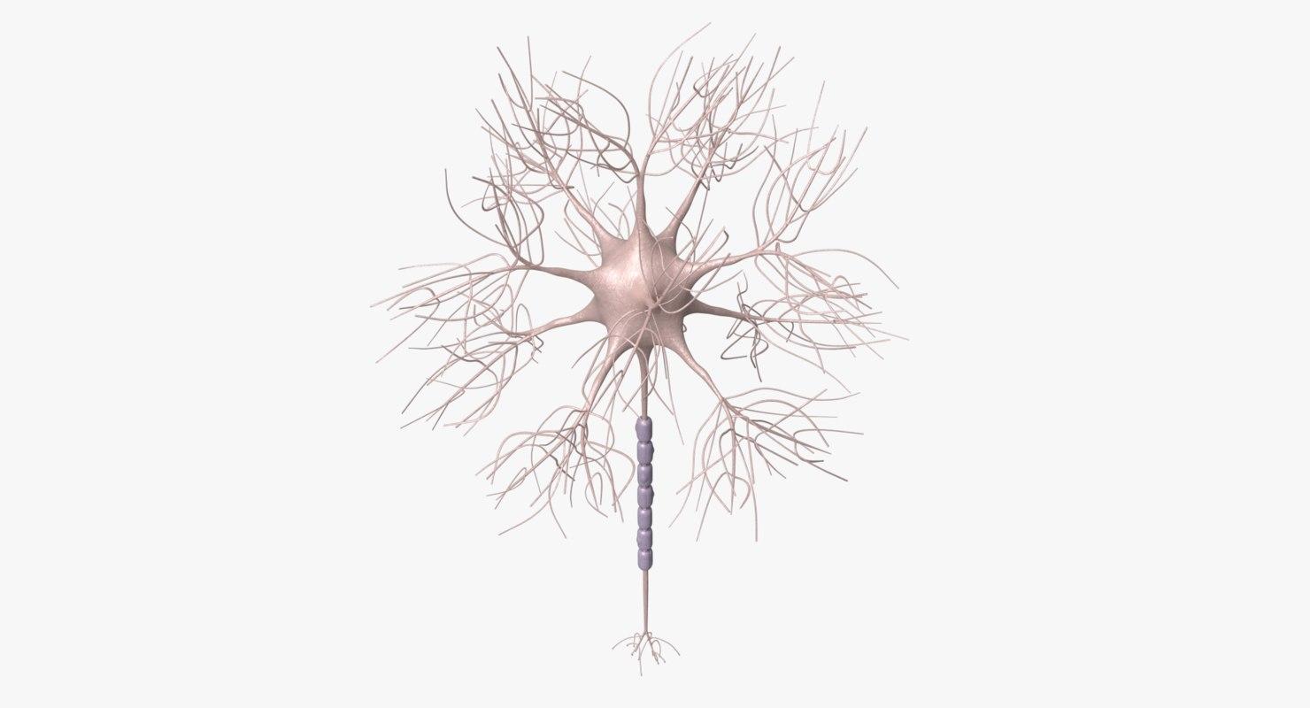 motoric neuron 3D