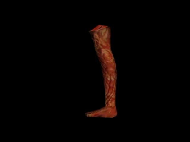 3D leg