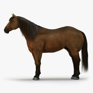 horse brown rigged fur 3D model