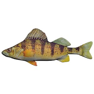 yellow perch 3D model
