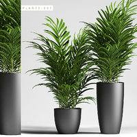 palm plants 137