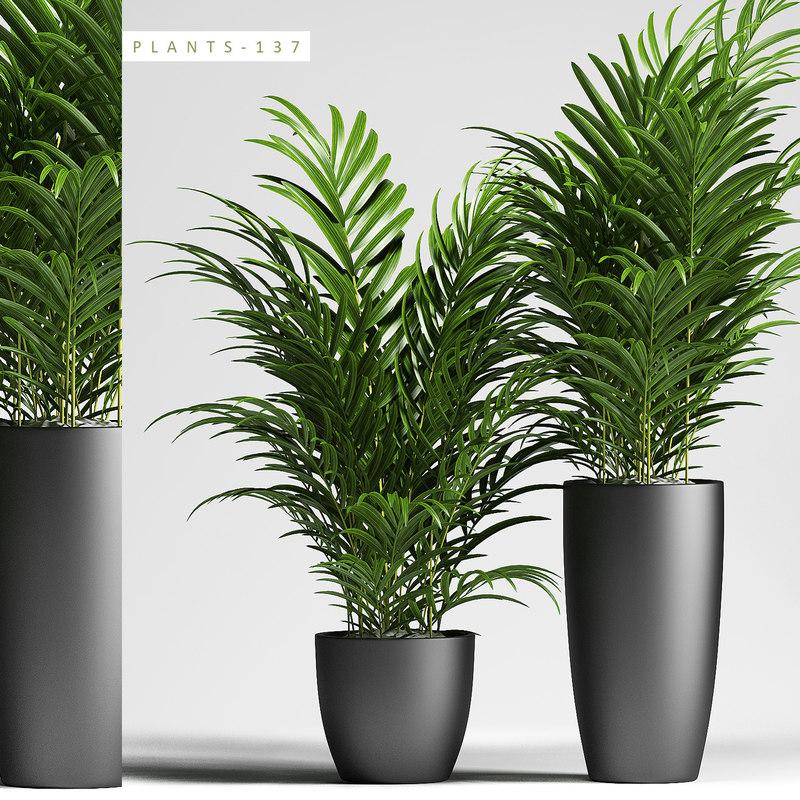 3D model plants 137 palm