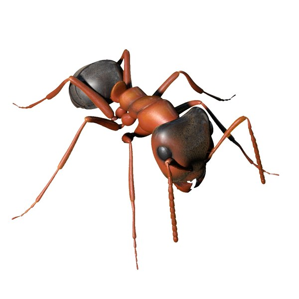 photorealistic ant rigged 3D model