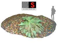 3D hd leaf model