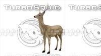 3D young deer