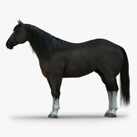 horse black rigged fur 3D model