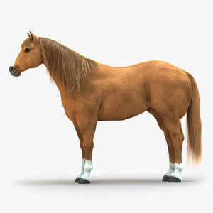 horse rigged fur model