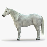 horse white grey rigged 3D